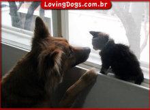 DogCat_600w435