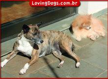 DogsSun2_600w435