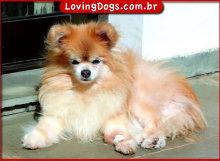 DogsSun_600w435